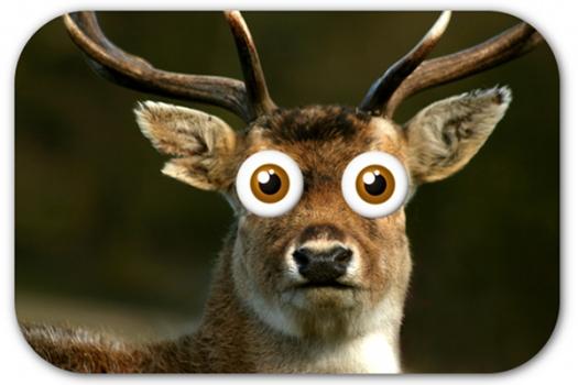 deer-in-headlights